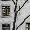 Branches And Windows by Cate Franklyn