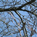 Branches  by Belle T Broskie