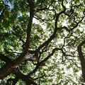 Branches by Chandelle Hazen