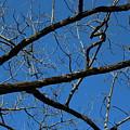 Branches by Hunter Kotlinski