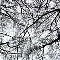 Branches by Nicholas Rainsford