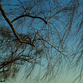 Branches Of A Weeping Willow Tree by Todd Gipstein