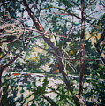 Branches Of Light by Sheila Holland