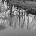 Branches Reflected by Priya Ghose