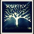 Branches by Rodrigo Maldonado
