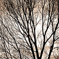 Branches Silhouettes Mono Tone by James BO  Insogna