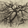 Branching Out In Autumn Antique by David Gn