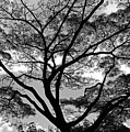 Branching Out In Bw by Jennifer Robin