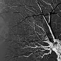 Branching Out by Robert McKay Jones