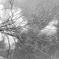 Branching Out by Sara Hudock
