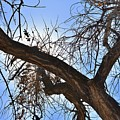 Branching Out by Sharon Horning