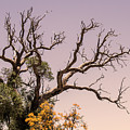 Branching Out by Tania Read