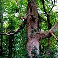 Branching Tree by Mindy Newman