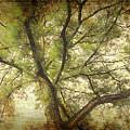 Branching Upward by Lydia Holly