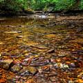 Brandywine Creek  by Michael Shake