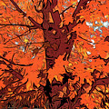 Brandywine  Maple Fall Colors 2 by Chris Taggart