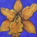 Brassolaeliocattleya Hybrid by Julia Dangaran