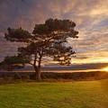 Bratley View Tree by Giovanni Giuliano