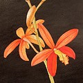 Brazilian Red Laelia-miniature Orchid by Carol Sabo