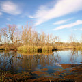 Brazos Bend Winter Bliss by Katrina Lau