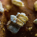 Bread Macro Food by David Haskett II
