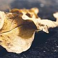 Breaks Of Autumn by Faiqe Sumer