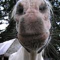 Breath Of A Kind Pony by Suzanne Shepherd