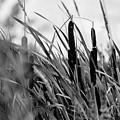 Breeze by John Gagnon