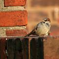 Brick And Bird by Jason Hochman