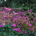 Brick Wall And Azalea by Menachem Ganon