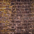 Vine Up A Brick Wall  by Stanton Tubb