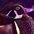 Bride Duck Male Duck Bird  by PixBreak Art