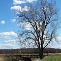 Bridge And A Tree by Linda Kerkau