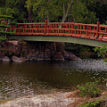 Bridge At Morikami by Bruce Gaynor