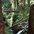 Bridge At Sol Duc Fall #1 by Dan Hartford