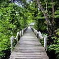 Bridge In Kosrae by Dan Norton