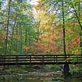 Bridge In The Forest by James Jones
