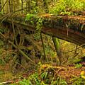 Bridge In The Rainforest by Adam Jewell