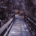 Bridge In The Shenandoah by Susan  Epps Oliver