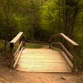 Bridge In The Woods by Sarah Johnson