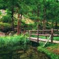 Bridge by James Billings