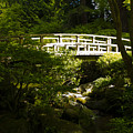 Bridge Of Peace by Christina Bailey