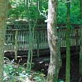Bridge To Calm by Karla Hoffman