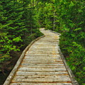 Bridge To Chimney Pond by Elizabeth Dow