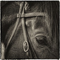 Bridled II by David Patterson