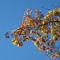 Bright Autumn Branch by Michelle Miron-Rebbe