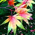 Bright Autumn Leaves Tatton Park by Mo Barton