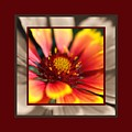 Bright Blanket Flower With Design by Joy Watson