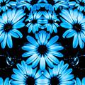 Bright Blue Daisies by Heather Joyce Morrill