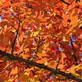 Bright Colorful Autumn Tree Leaves Art Prints Baslee Troutman by Baslee Troutman